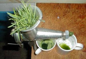 Hvedegræssaft presses med en saftpresser (helst en gammeldags)